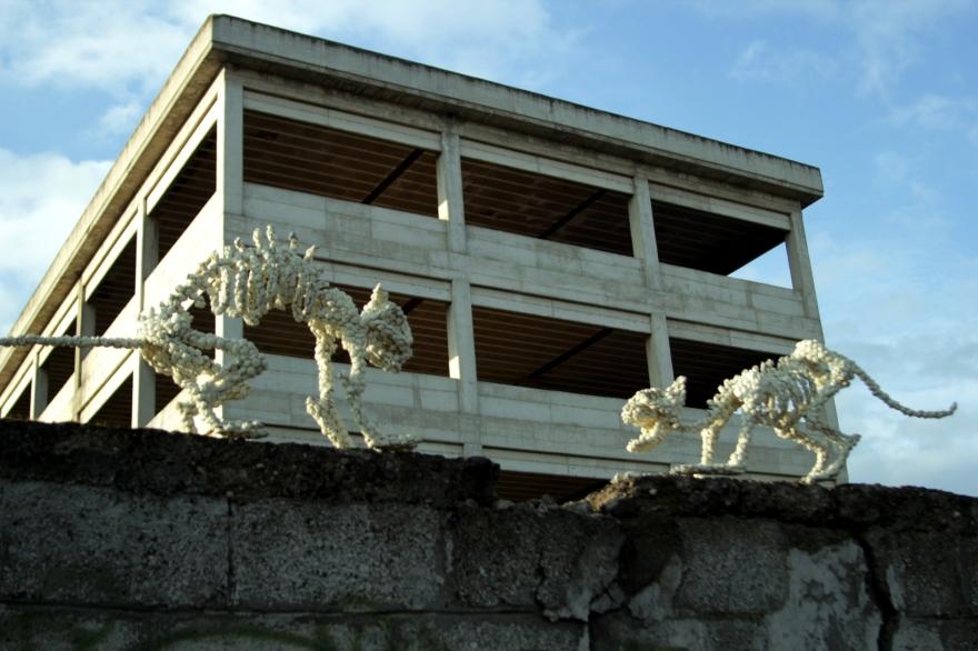 felis-street-view